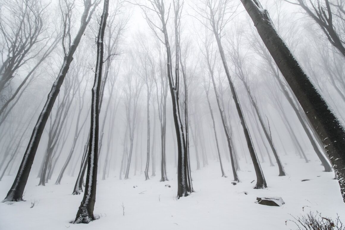 wide lens snow in the forest φωτογραφία τοπίου Travelshare.gr