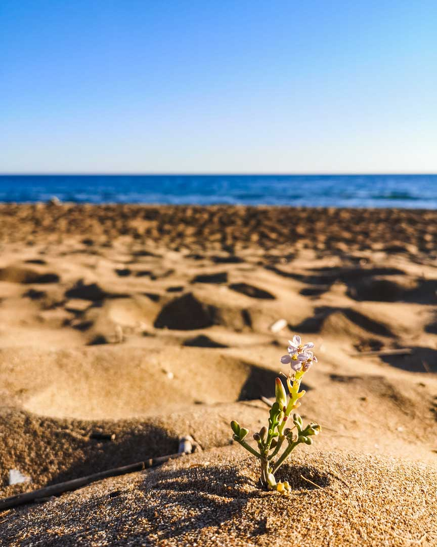 Διακοπές σε Δεντρόσπιτο παραλία Μαραθιάς